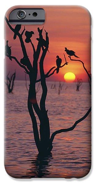 Birds On Tree, Lake Kariba At Sunset iPhone Case by Axiom Photographic