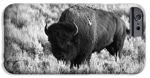 American Bison iPhone Cases - Bison in Black and White iPhone Case by Sebastian Musial
