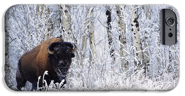 Animals Photographs iPhone Cases - Bison In The Snow, Elk Island National iPhone Case by Richard Wear