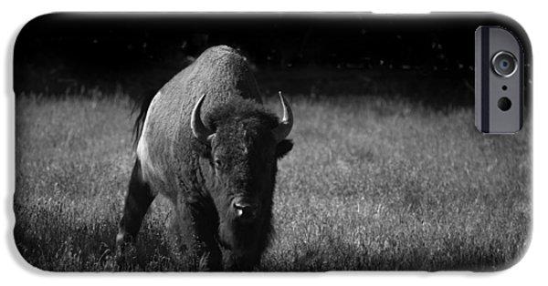 Bison iPhone Case by Ralf Kaiser