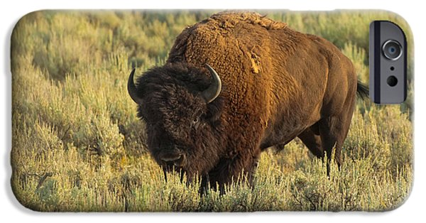 Nature iPhone Cases - Bison iPhone Case by Sebastian Musial