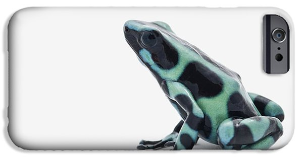 Amphibian iPhone Cases - Black And Green Poison Dart Frog iPhone Case by Corey Hochachka