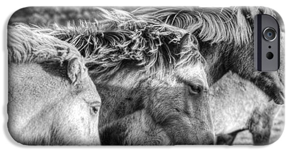 The Horse iPhone Cases - Black And White Image Of Icelandic iPhone Case by Robert Postma