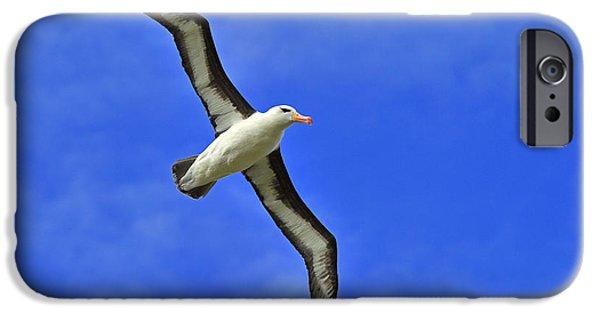 Albatross iPhone Cases - Black-browed Albatross iPhone Case by Tony Beck