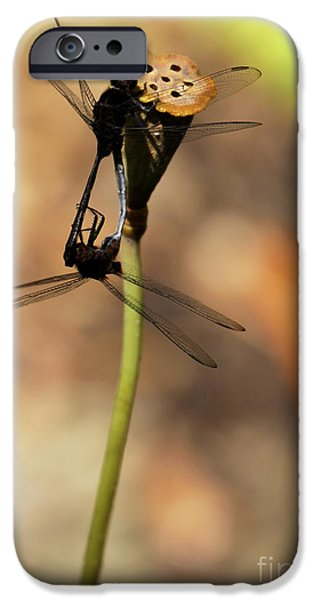 Preditor iPhone Cases - Black Dragonfly Love iPhone Case by Sabrina L Ryan
