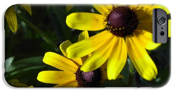 Florals Photographs iPhone Cases - Black eyed Susan iPhone Case by Mary-Lee Sanders