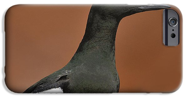 Sea Birds iPhone Cases - Black Guillemot iPhone Case by Tony Beck