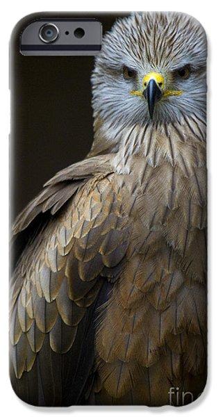 Black Kite 2 iPhone Case by Heiko Koehrer-Wagner