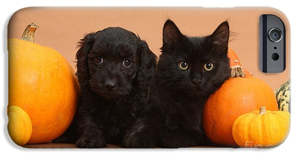 Black Dog iPhone Cases - Black Kitten & Puppy With Pumpkins iPhone Case by Mark Taylor