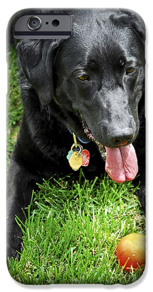 One iPhone Cases - Black lab dog with a ball iPhone Case by Elena Elisseeva
