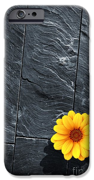 Slate Pattern iPhone Cases - Black Schist Flower iPhone Case by Carlos Caetano