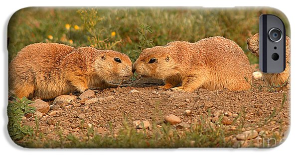 Prairie Dogs iPhone Cases - Black-tailed Prairie Dog Greeting Kiss iPhone Case by Max Allen