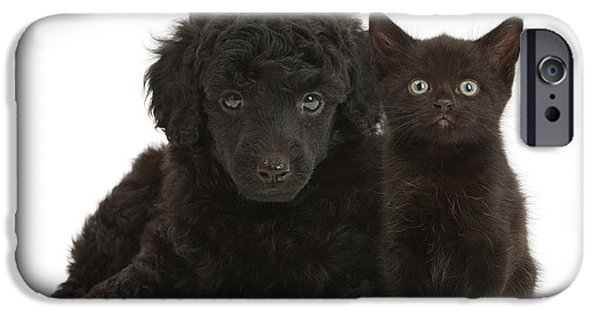 Dog And Toy iPhone Cases - Black Toy Poodle And Black Kitten iPhone Case by Mark Taylor