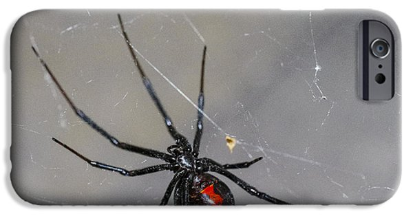 Spider iPhone Cases - Black Widow Spider iPhone Case by Scott McGuire