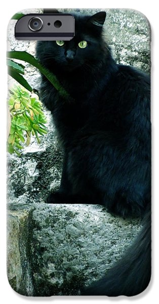 Staris iPhone Cases - Blacky Cat iPhone Case by Colette V Hera  Guggenheim