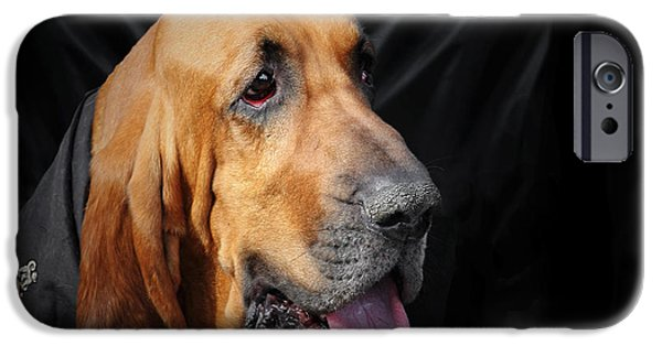 Pet Photography iPhone Cases - Bloodhound - Governed by a world of scents iPhone Case by Christine Till