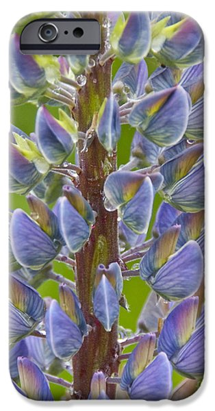 Blooming Lupine iPhone Case by Sean Griffin