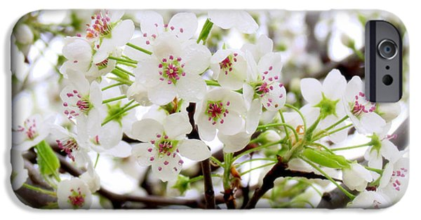 Etc. Photographs iPhone Cases - Blooming Ornamental Tree iPhone Case by Kay Novy