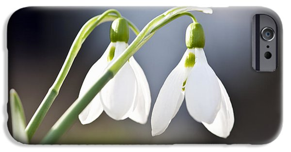 Young iPhone Cases - Blooming snowdrops iPhone Case by Elena Elisseeva
