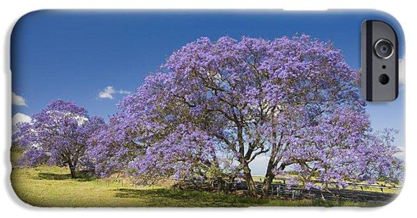 Jacaranda iPhone Cases - Blossoming Jacaranda iPhone Case by Dave Fleetham - Printscapes