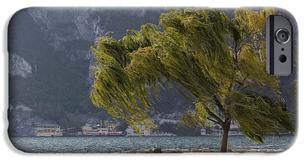 Recently Sold -  - Willow Lake iPhone Cases - Blowing in the wind iPhone Case by Raffaella Lunelli
