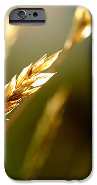 Blowing in the Wind iPhone Case by Thomas R Fletcher