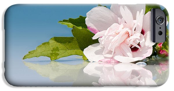 Althea iPhone Cases - Blue and White iPhone Case by Sari ONeal