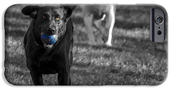 Dog Playing Ball iPhone Cases - Blue Ball iPhone Case by Jean Noren