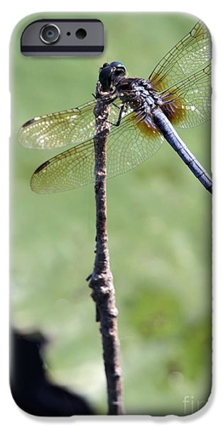 Preditor iPhone Cases - Blue Dasher Dragonfly Dancer iPhone Case by Sabrina L Ryan