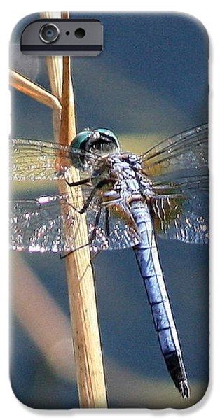 Blue Dragonfly iPhone Case by Carol Groenen