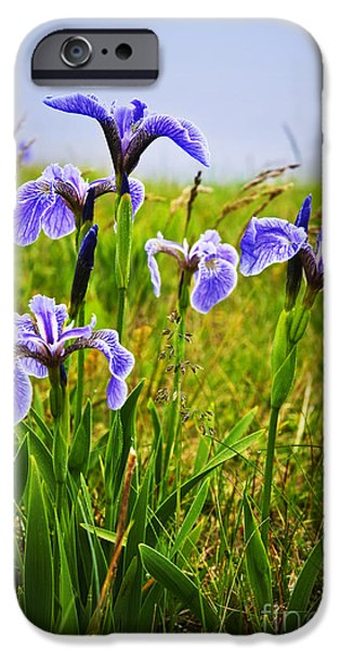 Botanical Photographs iPhone Cases - Blue flag iris flowers iPhone Case by Elena Elisseeva