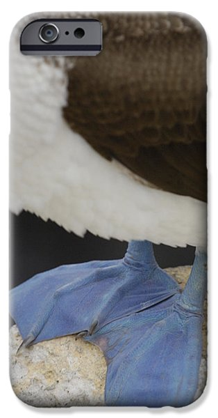 Blue-footed Booby Sula Nebouxii iPhone Case by Pete Oxford