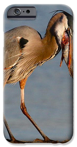 Blue Heron vs. Rainbow Trout iPhone Case by Paul Marto