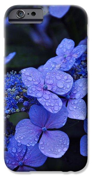 Drops iPhone Cases - Blue Hydrangea iPhone Case by Noah Cole