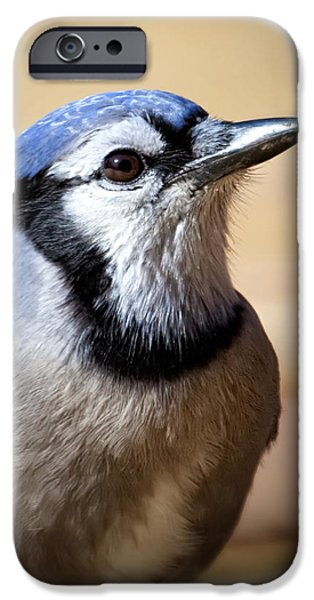 Birds iPhone Cases - Blue Jay Portrait iPhone Case by Al  Mueller