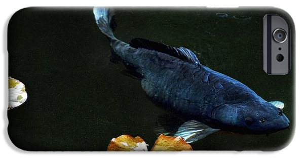 Butterfly Koi Photographs iPhone Cases - Blue Koi Lillies iPhone Case by Don Mann