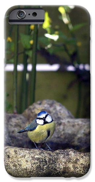Blue tit on bird bath iPhone Case by Jane Rix