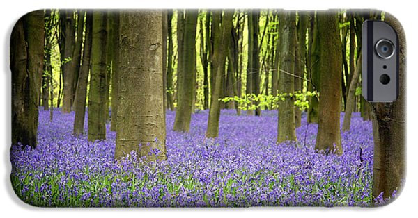 Foliage iPhone Cases - Bluebells iPhone Case by Jane Rix