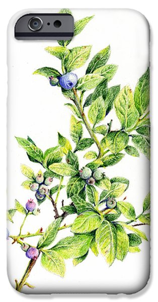 Botanical Drawings iPhone Cases - Blueberry Branch iPhone Case by Betsy Gray