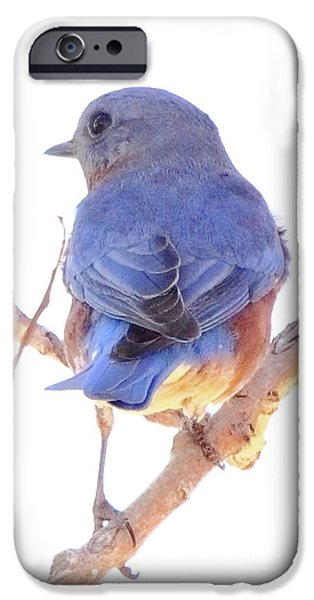 Animal Cards Photographs iPhone Cases - Bluebird On White iPhone Case by Robert Frederick