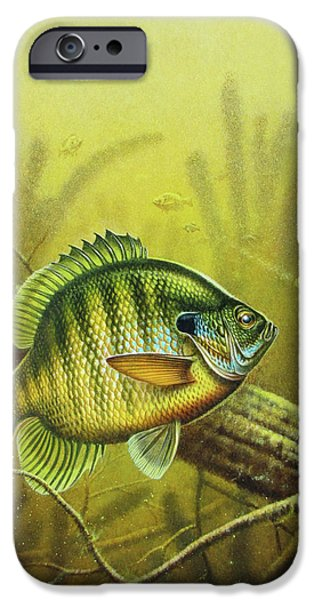 Jon Q Wright iPhone Cases - Bluegill and Jig iPhone Case by JQ Licensing