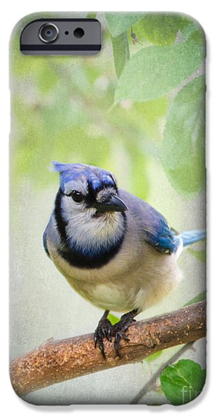 Bluejay iPhone Cases - Bluejay in a Tree iPhone Case by Betty LaRue
