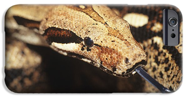 Boa Constrictor iPhone Cases - Boa Constrictor iPhone Case by David Aubrey