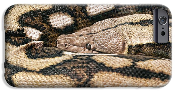 Serpent Photographs iPhone Cases - Boa Constrictor iPhone Case by Tom Mc Nemar