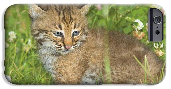 Bobcat Kittens iPhone Cases - Bobcat Kitten iPhone Case by John Pitcher