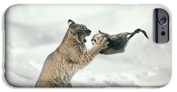 Lynx Rufus iPhone Cases - Bobcat Lynx Rufus Capturing Muskrat iPhone Case by Michael Quinton