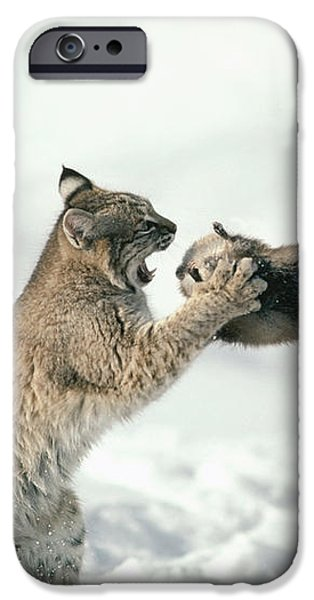 Bobcat Lynx Rufus Capturing Muskrat iPhone Case by Michael Quinton