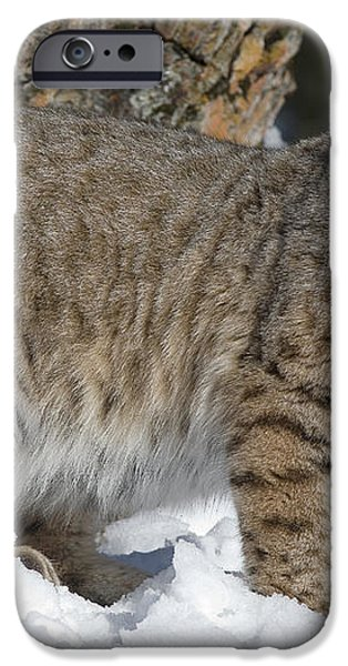 Bobcat Lynx Rufus In The Snow iPhone Case by Matthias Breiter