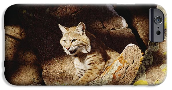 Lynx Rufus iPhone Cases - Bobcat Lynx Rufus Portrait On Rock iPhone Case by Gerry Ellis
