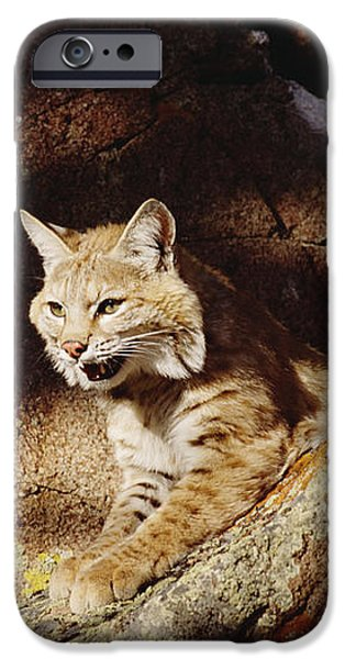 Bobcat Lynx Rufus Portrait On Rock iPhone Case by Gerry Ellis